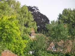 View over the South-East side of the village taken from the School Green, variations of trees aplenty